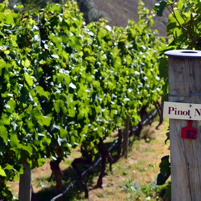 Vinmarker NZ